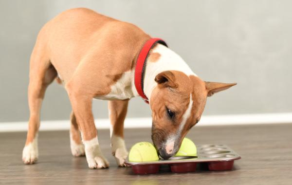 5 things to help prolong your dog's life