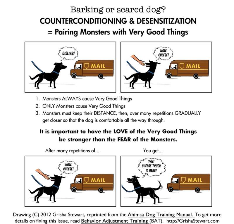 How to manage a reactive dog