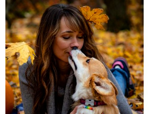 5 reasons why your dog kisses you
