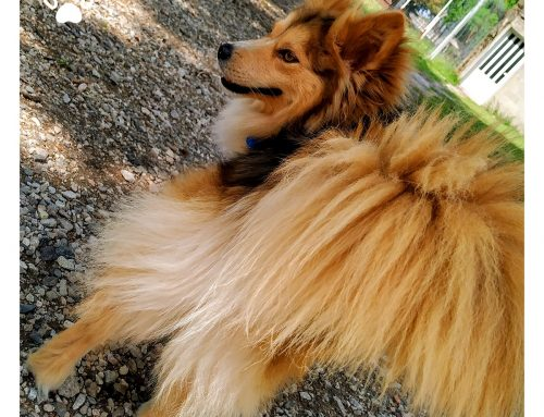 Dog tails wags – what do they mean?