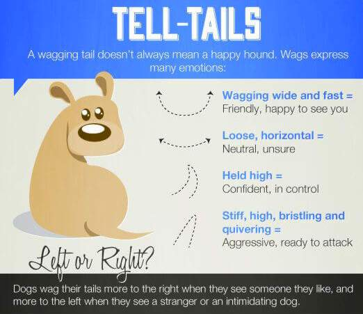 Dog tails wags