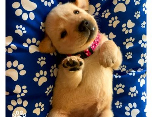5 important things you should teach your puppy ASAP