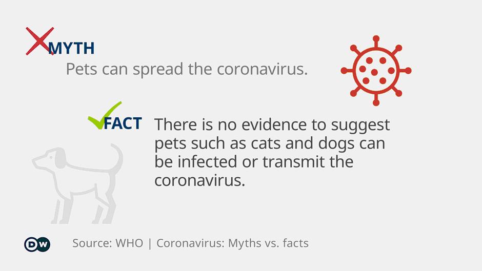 Coronavirus in Dogs