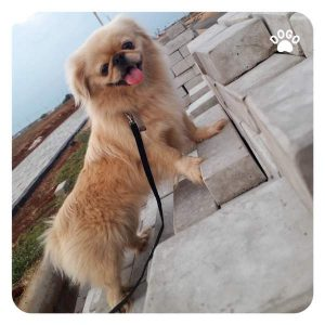 Dog overly excited for walk