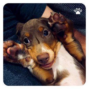Как ухаживать за собакой во время вспышки коронавируса?