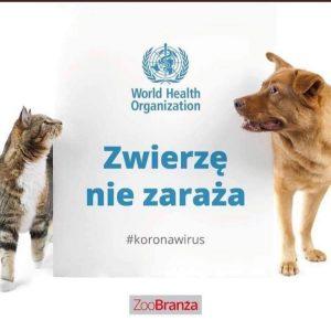 koronawirus u psa