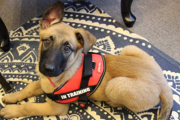Service dog training with Dogo App