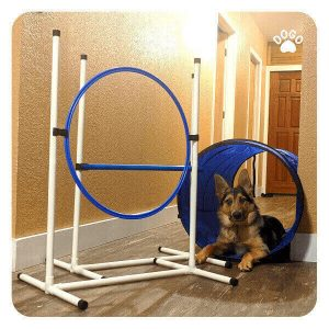 How to keep your dog motivated to train