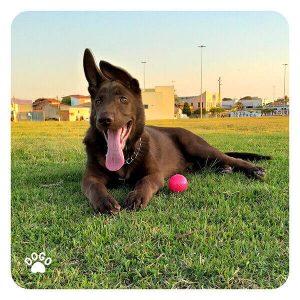 Jak zmotywować psa do treningu