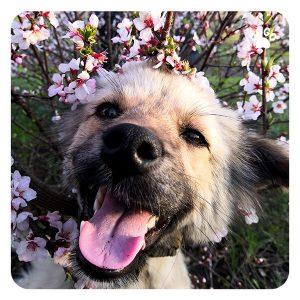 Pewność siebie – poczucie własnej wartości u psów