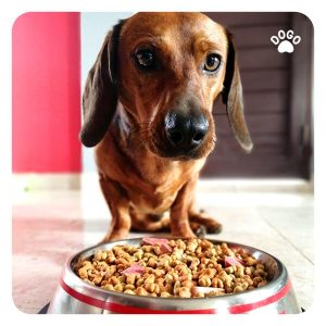 How many calories should my dog get per day