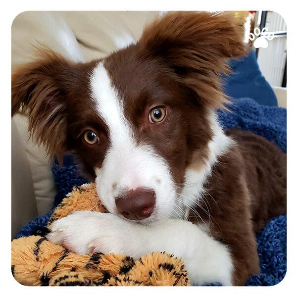 Self-confidence – self-esteem in dogs