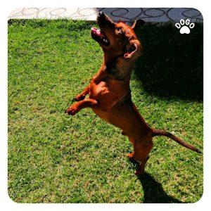 Mój pies na mnie skacze