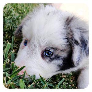 Lękliwy pies