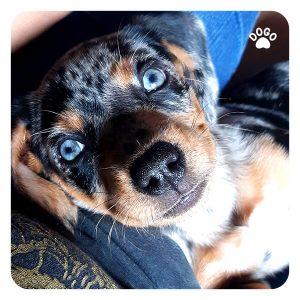 Szczekanie Na Inne Zwierzęta, Psy, Ludzi