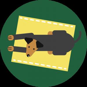 Jak oduczyć psa żebrania przy stole