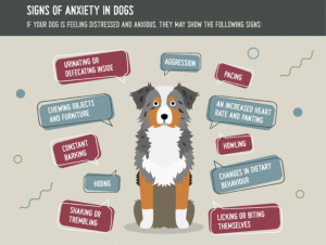 Anxiety In Dogs Due To Pandemic