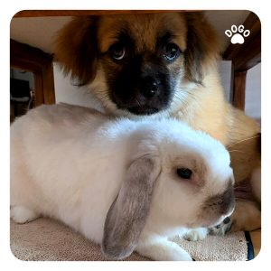 How To Introduce A Rabbit To Your Dog