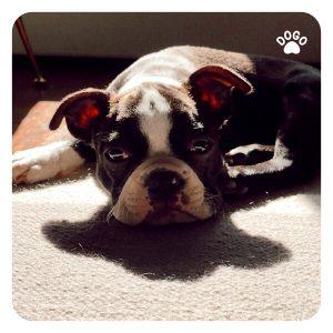 Dlaczego Pies Wyje i Jak Sobie Z Tym Poradzić