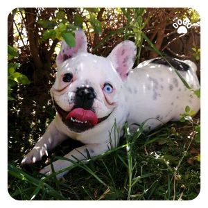 Brachycephalic Dog Breeds and Health Issues