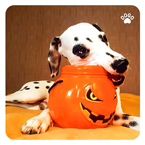 Halloween Dog Food Safety Guide