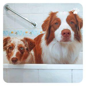 When Can I Start Bathing My Dog