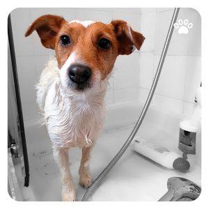 ¿Cuándo puedo empezar a bañar a mi perro?
