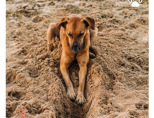 Why Does My Dog Love Digging?