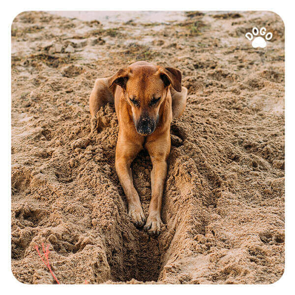 Why Does My Dog Love Digging
