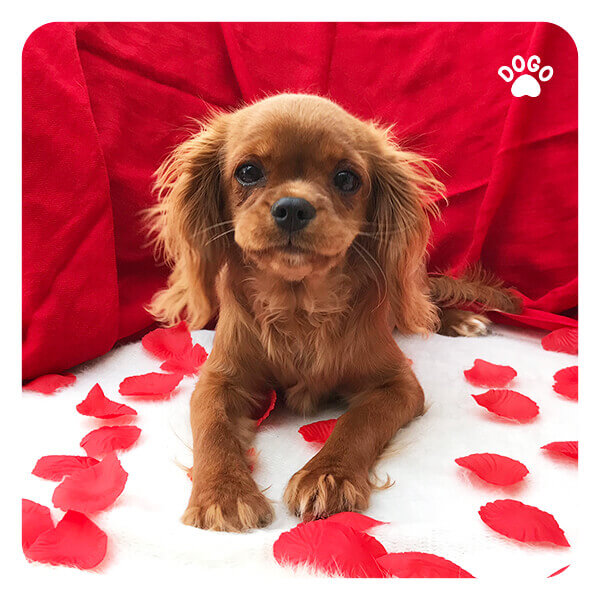 Valentine's Day Gift Guide For Your Pet