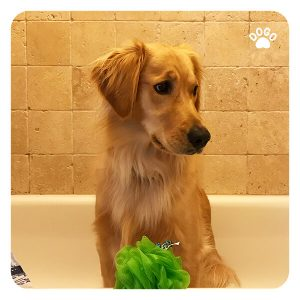 Prepare an Anxious Dog for Grooming