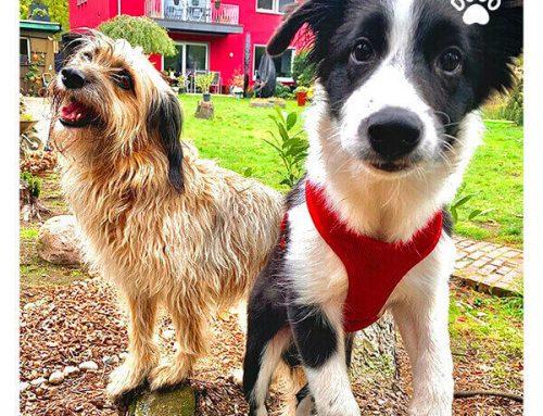 Les chiens surexcités – comment leur apprendre à être calme?