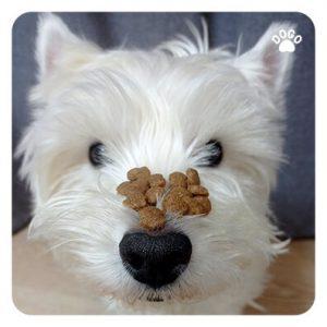 Pies Kradnie Jedzenie