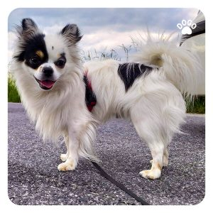Dog Breeds for a Small House