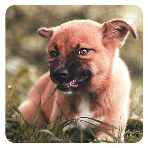 Reasons for Dog Aggression