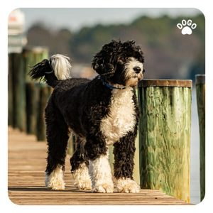 Dog Breeds for Outdoor
