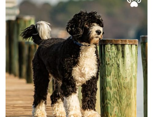 10 Best Dog Breeds for Outdoor Enthusiasts